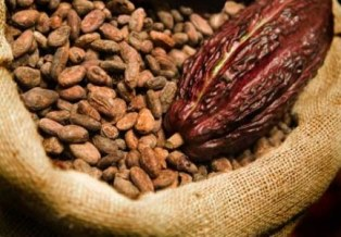 Ghana cocoa gets global boost with Olam acquisition of ADM